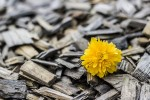 4 วิธีหลีกหนีการเป็นดอกไม้ริมทาง!