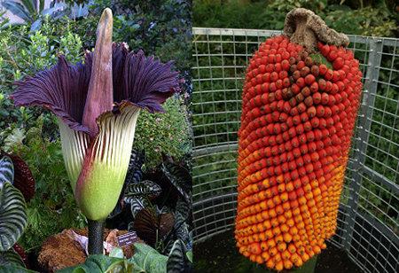 10 สุดยอดดอกไม้แปลกๆ ของโลก