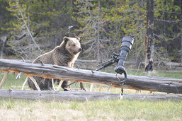 อันนี้ซวยหนักกว่า กล้องก็เช่าเค้ามา แต่ต้องมาเห็นหมีทำพัง