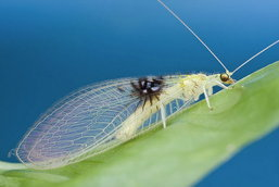 แมลงสายพันธุ์ใหม่ ถูกค้นพบโดยบังเอิญจาก Flickr
