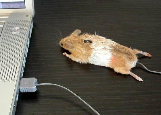 Mouse ไร้สาย vs มีสายจะเลือกอะไรดี ??
